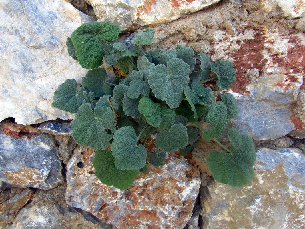 и на камнях растут цветы - tgtyjdrf