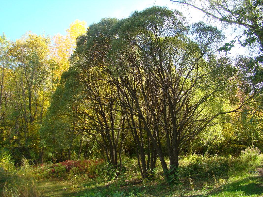 Осень в Ботаническом саду - марина ковшова