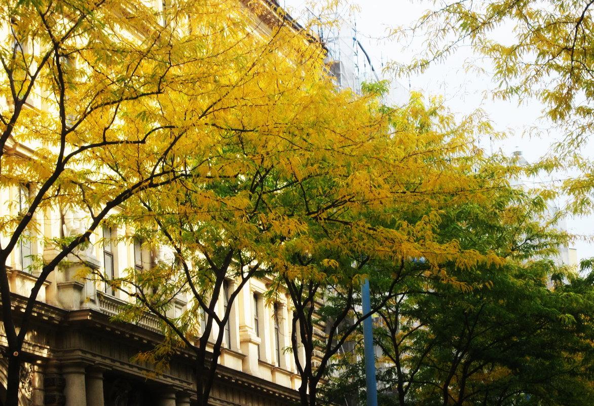 Осень в Вене - татьяна