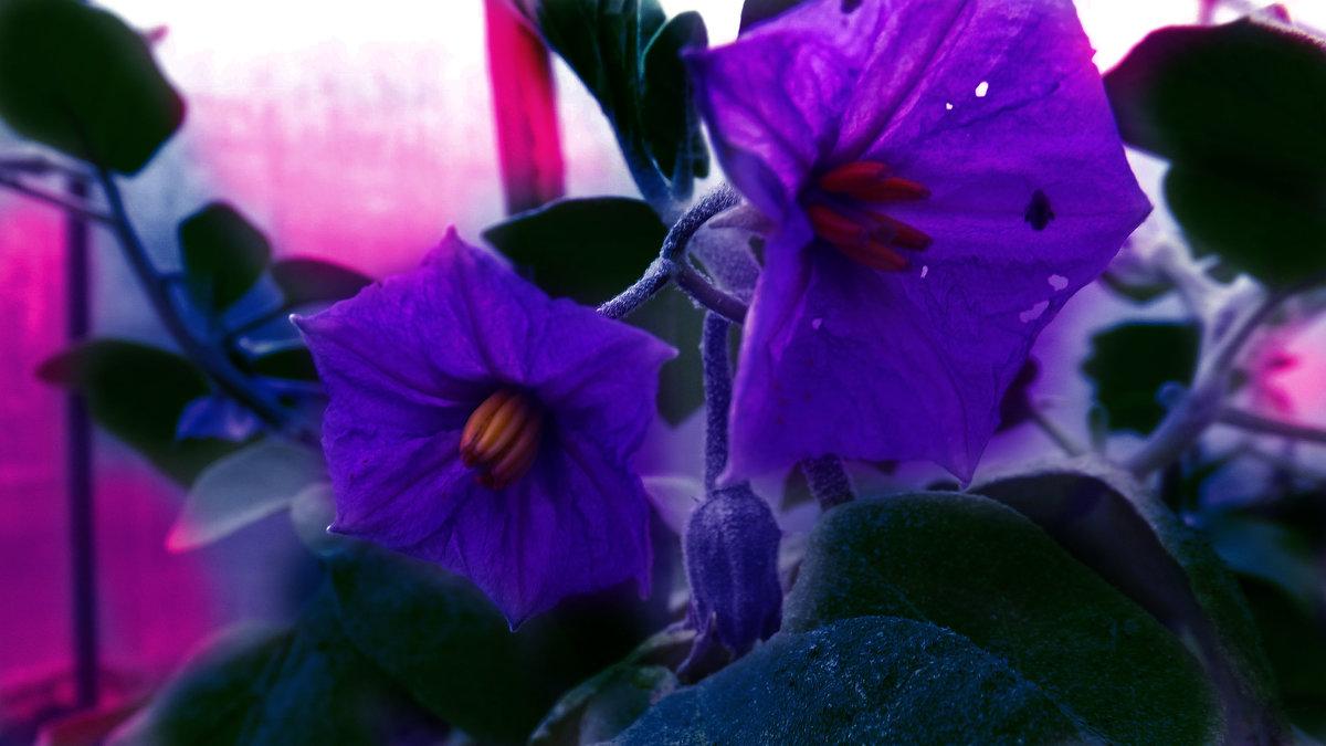 цветы - Александр