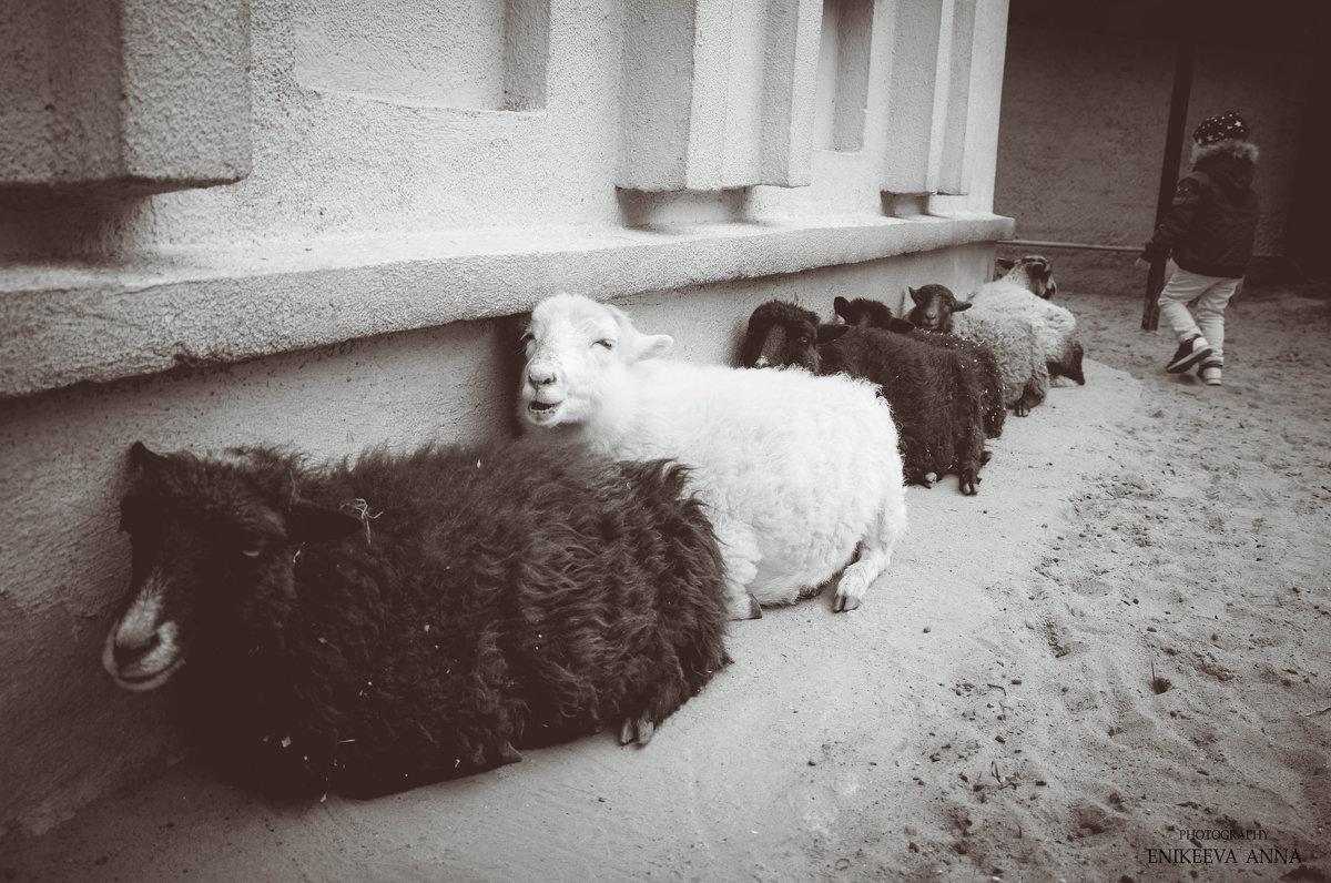 Как будто овца смеется надо мной )) - Anna Enikeeva