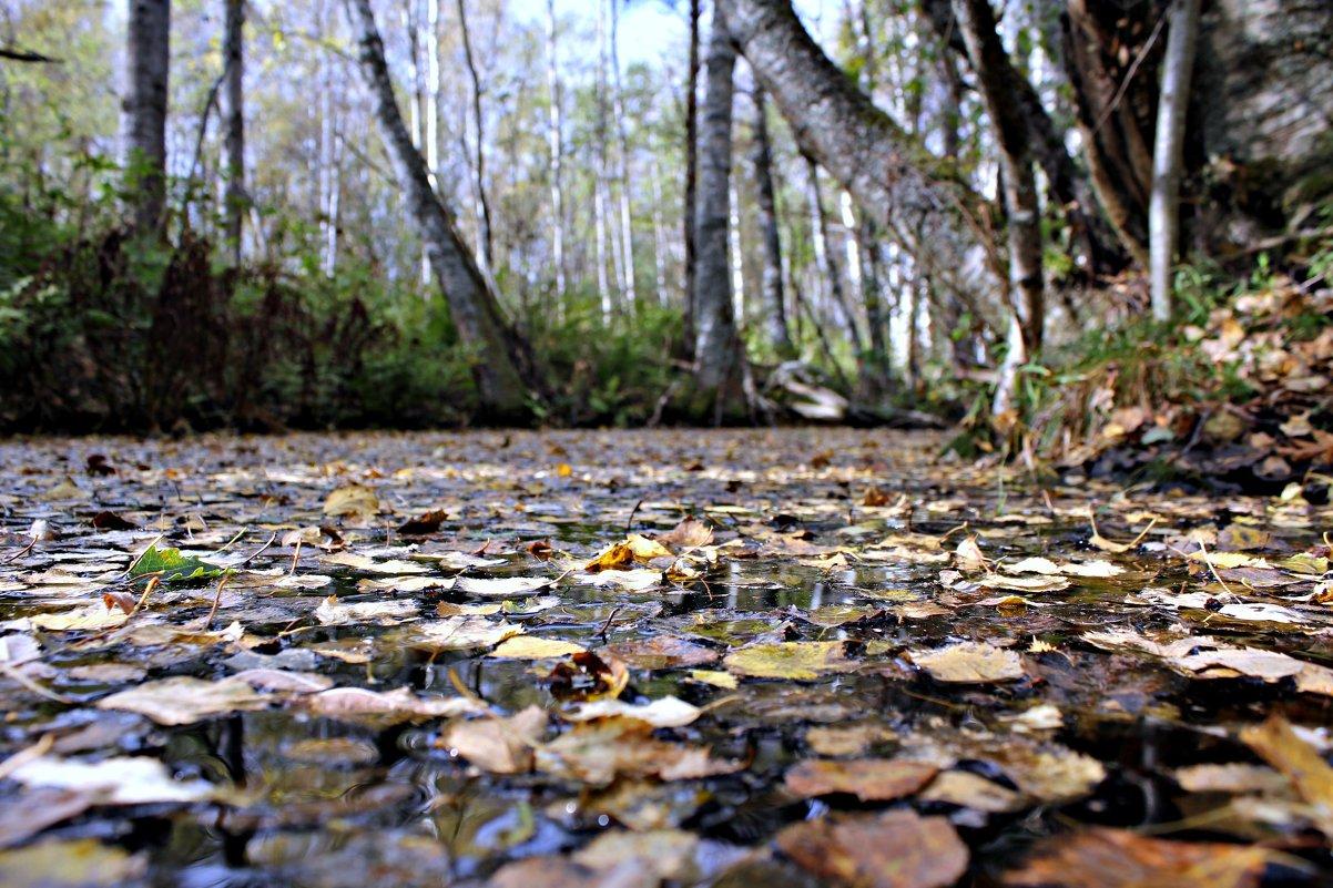 Осень плывёт - Наталья
