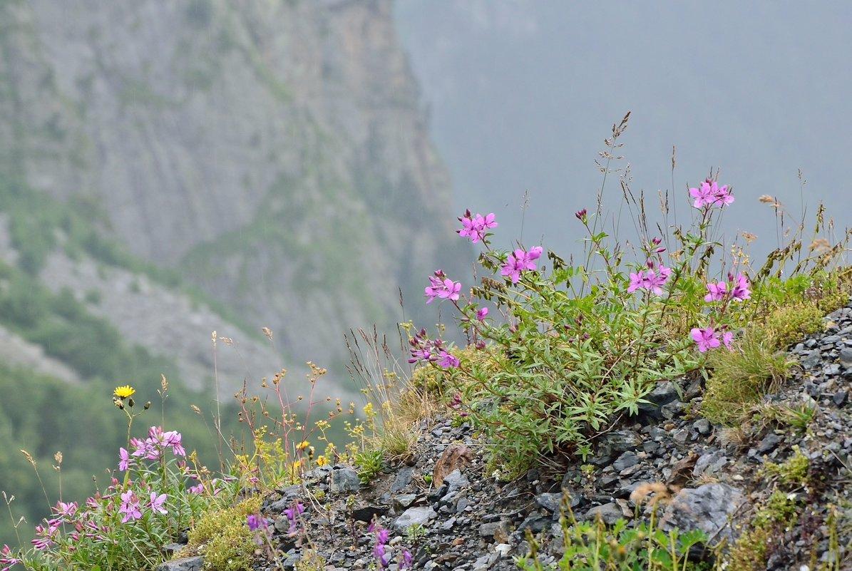 Цветы на горных склонах - Мария Климова