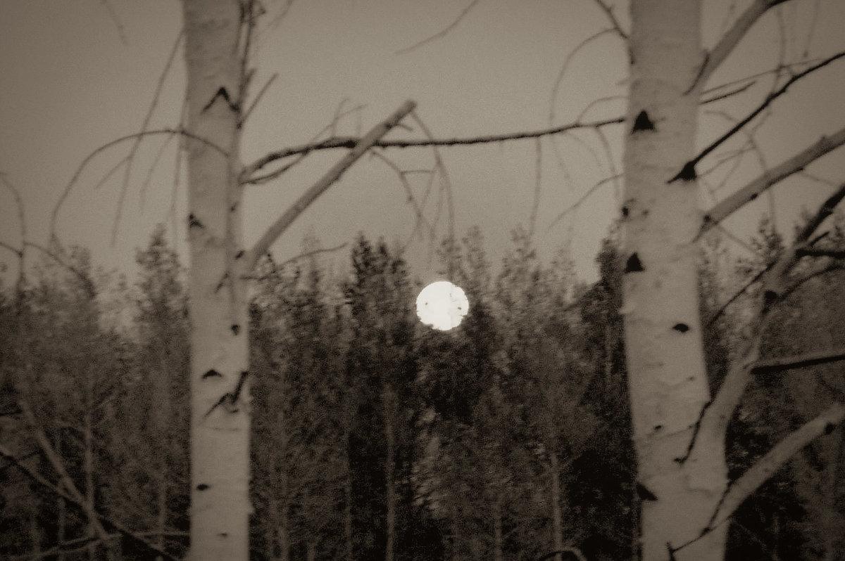 Ночь, восход луны. - Лариса Димитрова