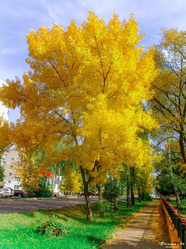 Жёлтое дерево - Вячеслав Баширов
