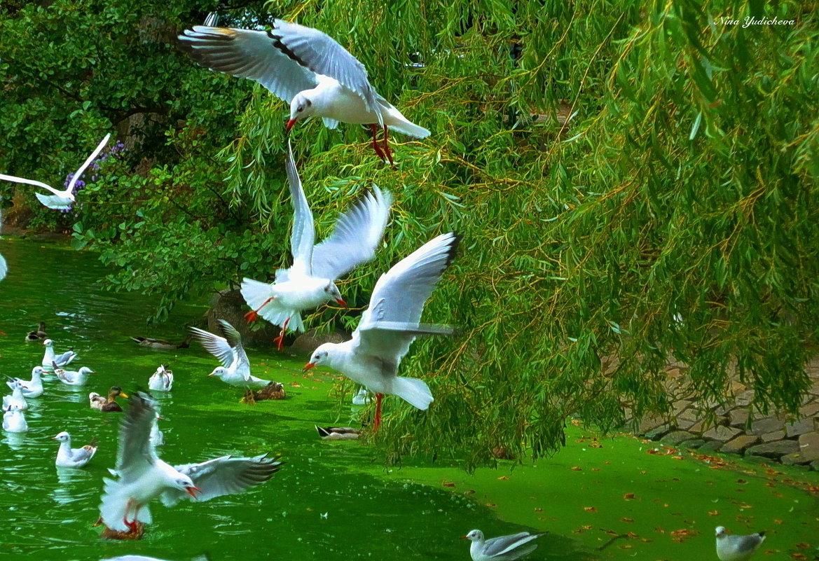 Чайки над озером - Nina Yudicheva