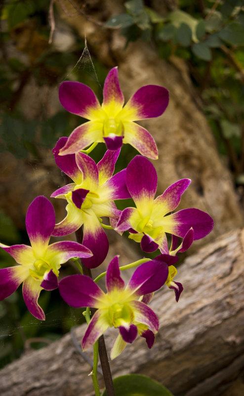 Орхидеи - Sergey Lebedev