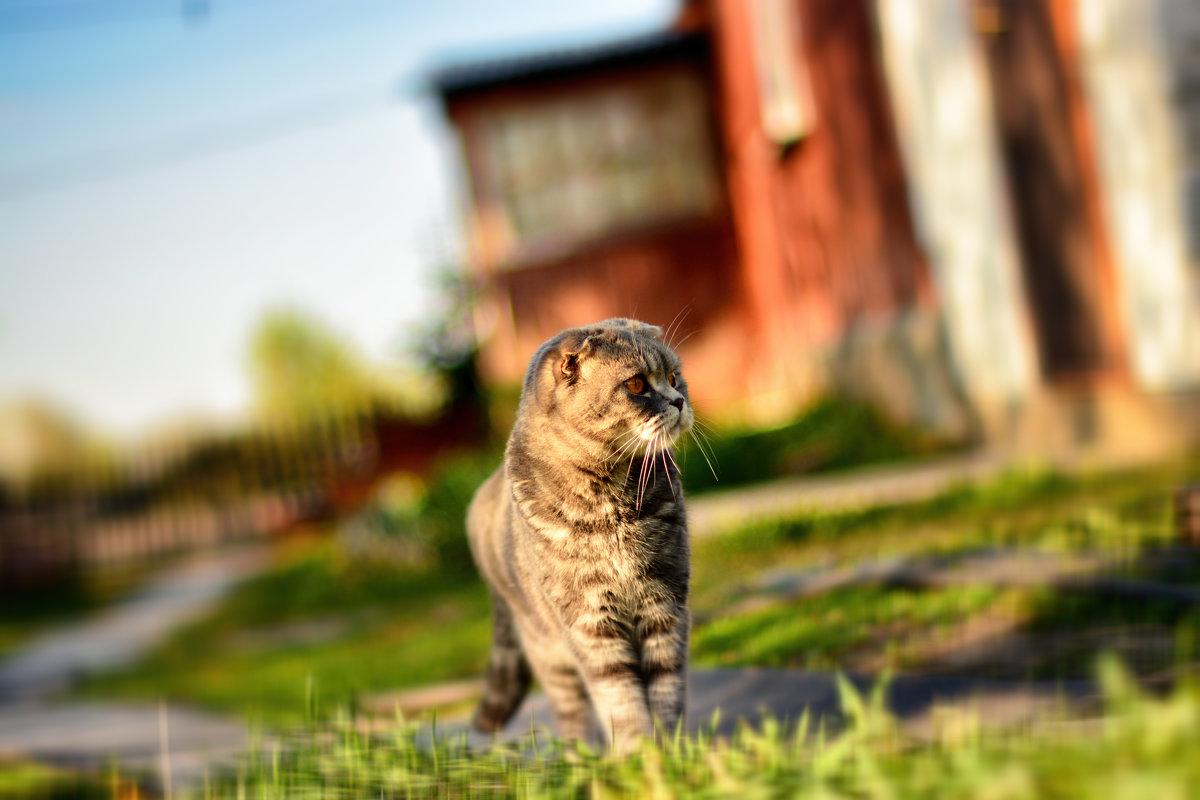 Кошка Сима - Юрий Фёдоров