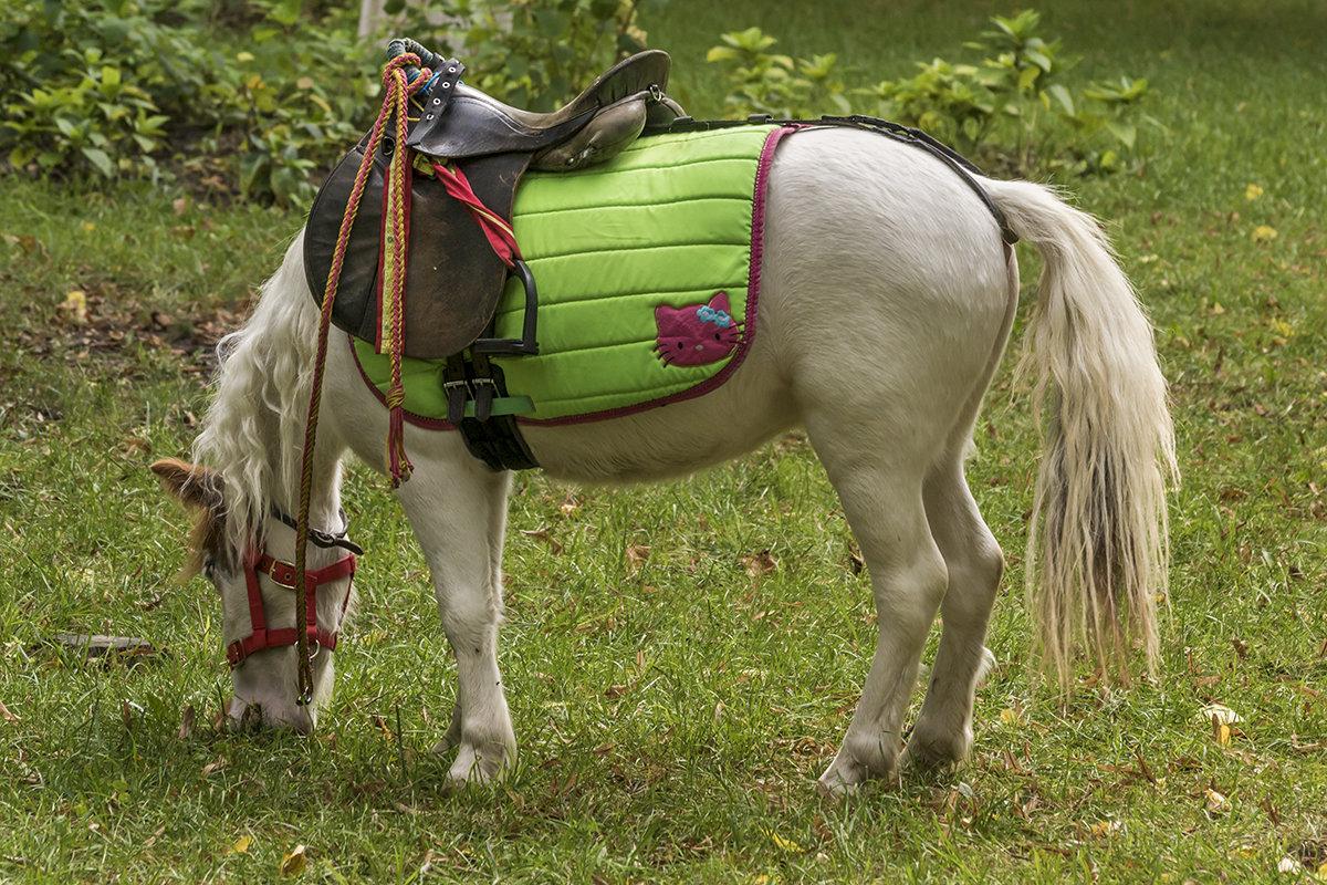 Маленькая лошадка - Игорь Сикорский