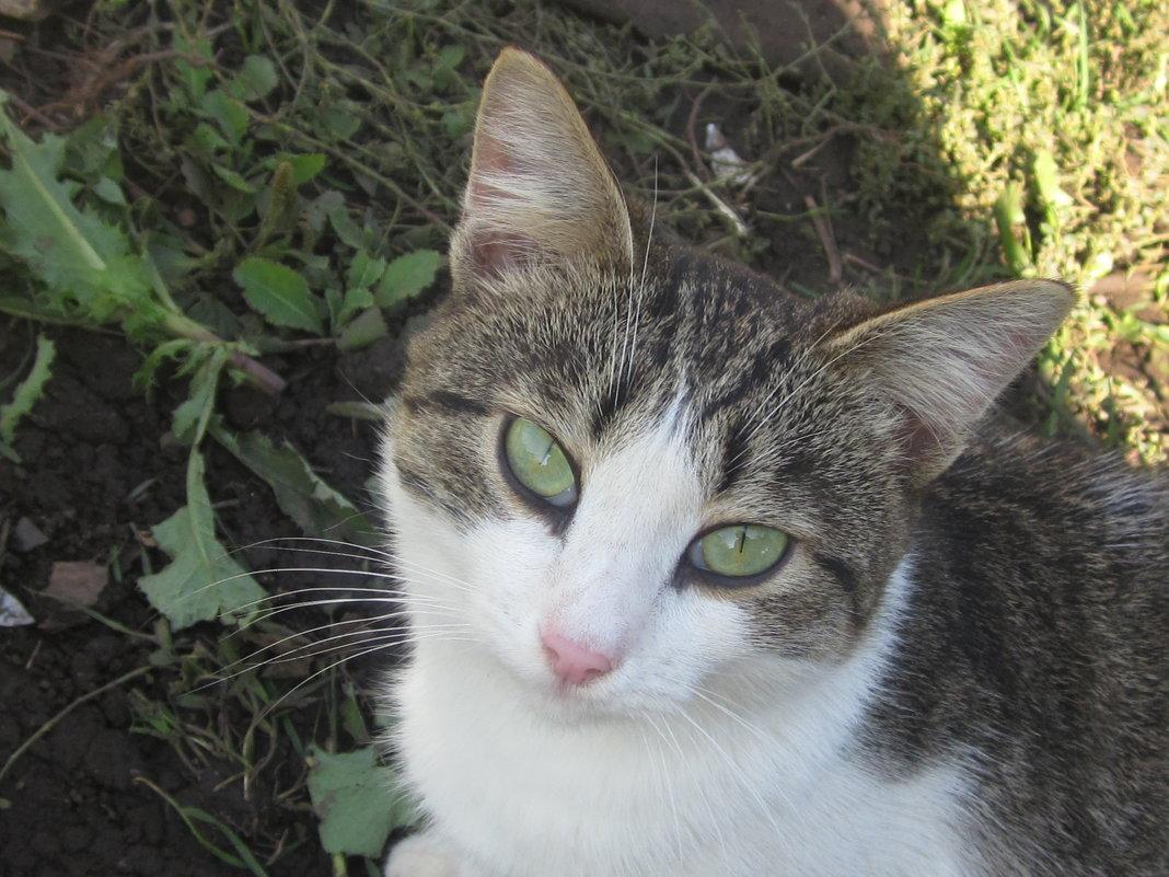 Котик - Надежда