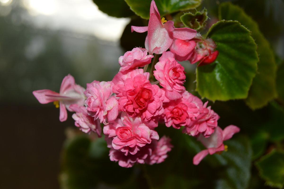 Мой цветок - Маргарита Кириллова