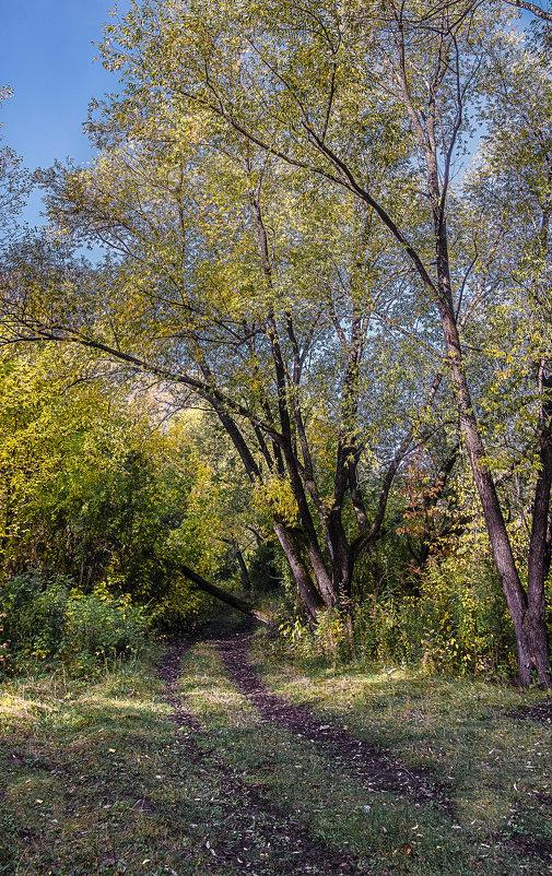 В осеннем лесу - Марк