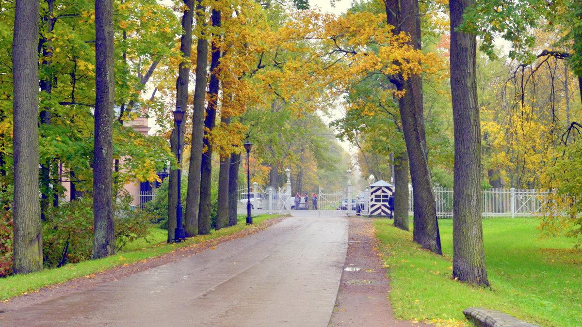 В парке осенью  /13/  Подкапризовая дорога - Сергей