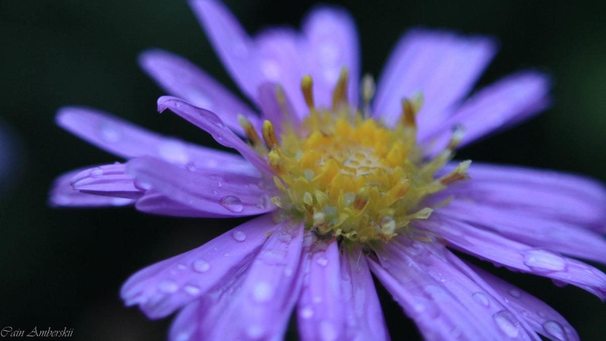 после дождя - Cain Amberskii