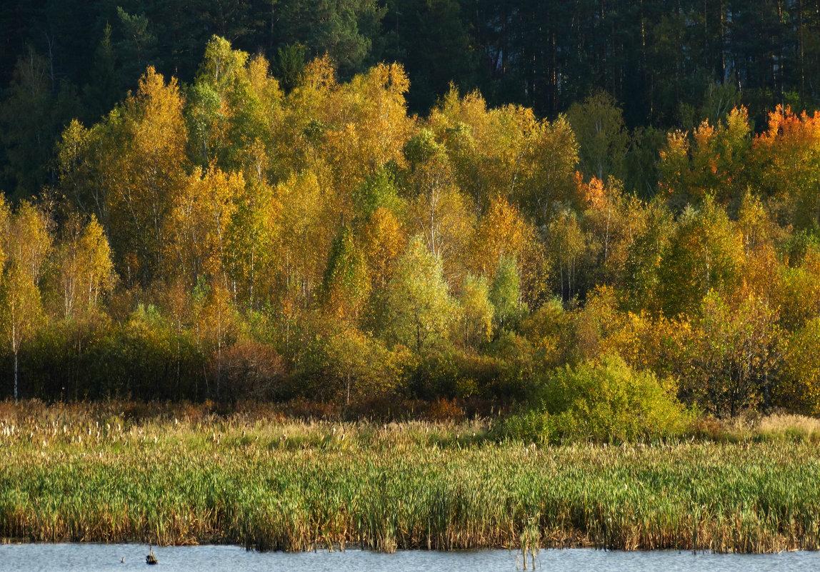 золотая осень - Alla Swan