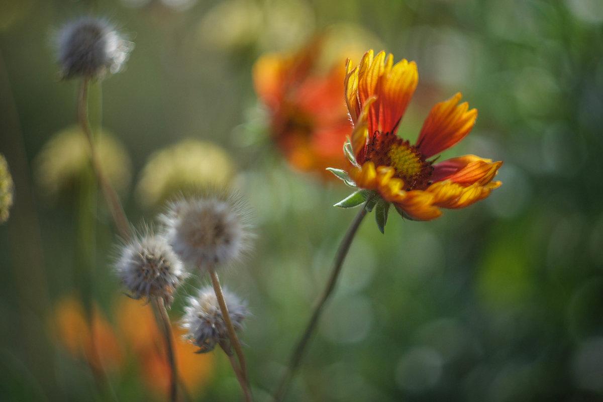 Осень - Irina Polkova