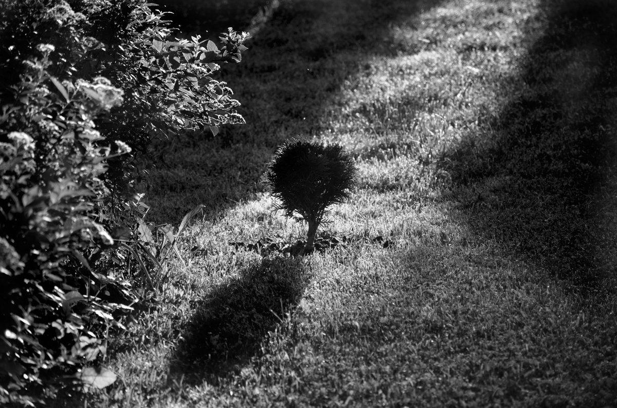 Свет и тень - Михаил Болдырев