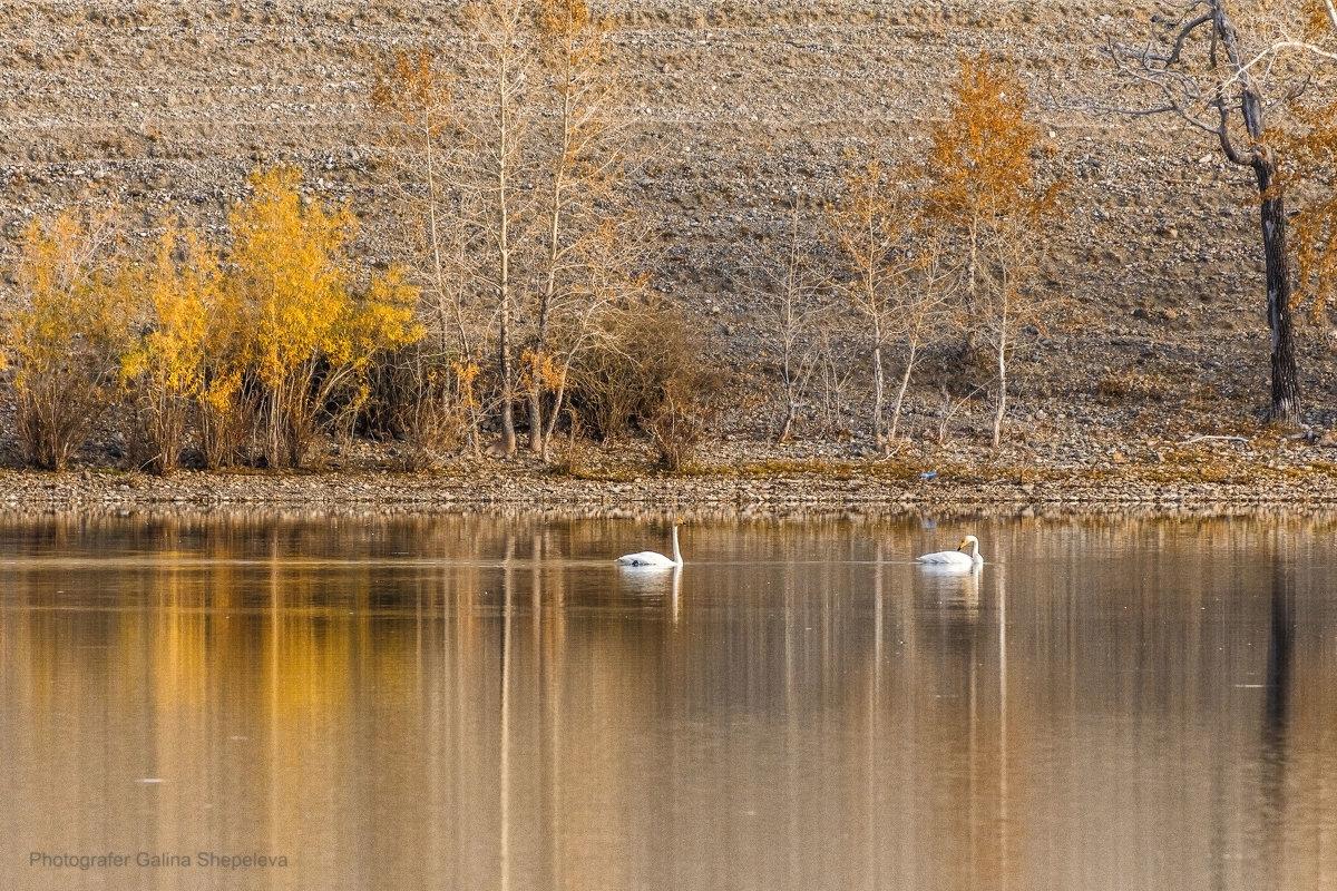 Осень на Красногорском озере - Галина Шепелева