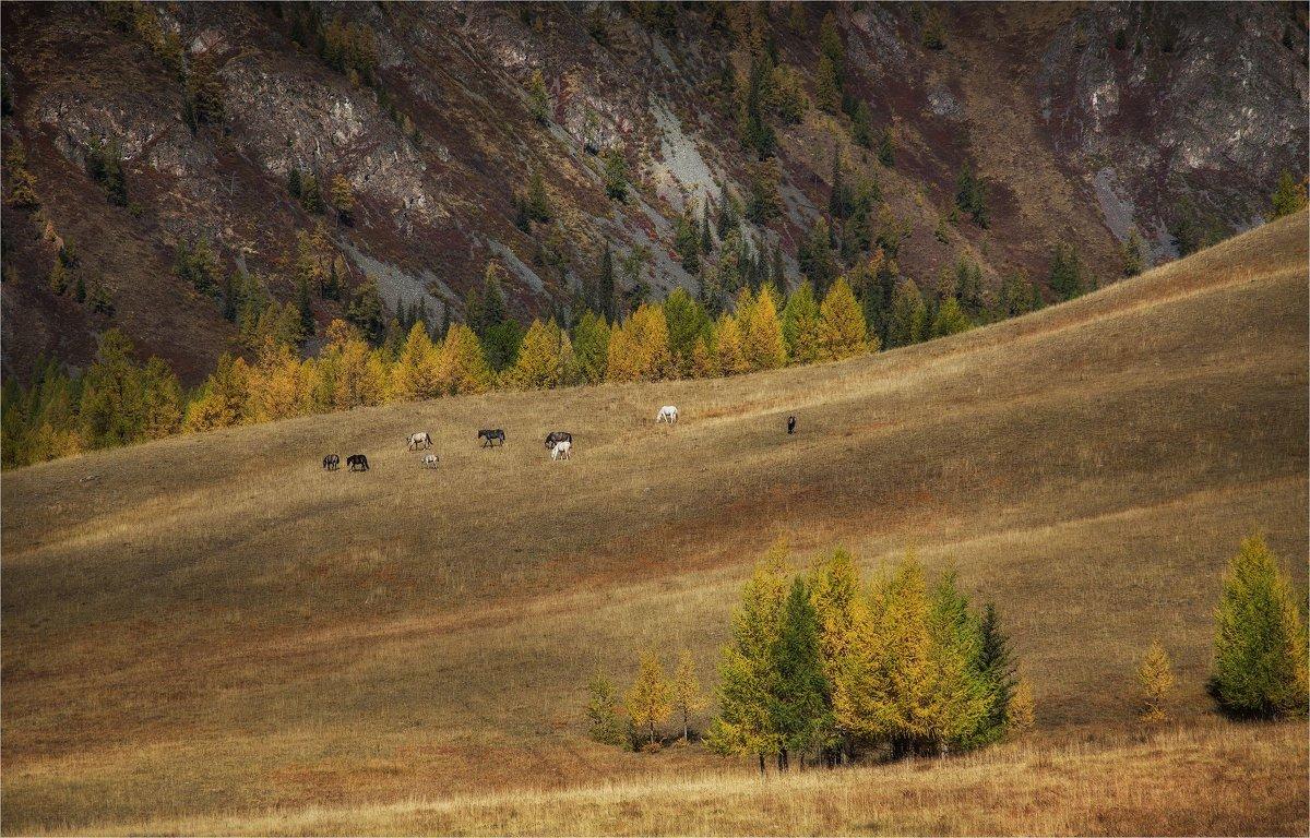 Осень на просторах Алтая. - Павел Сухоребриков