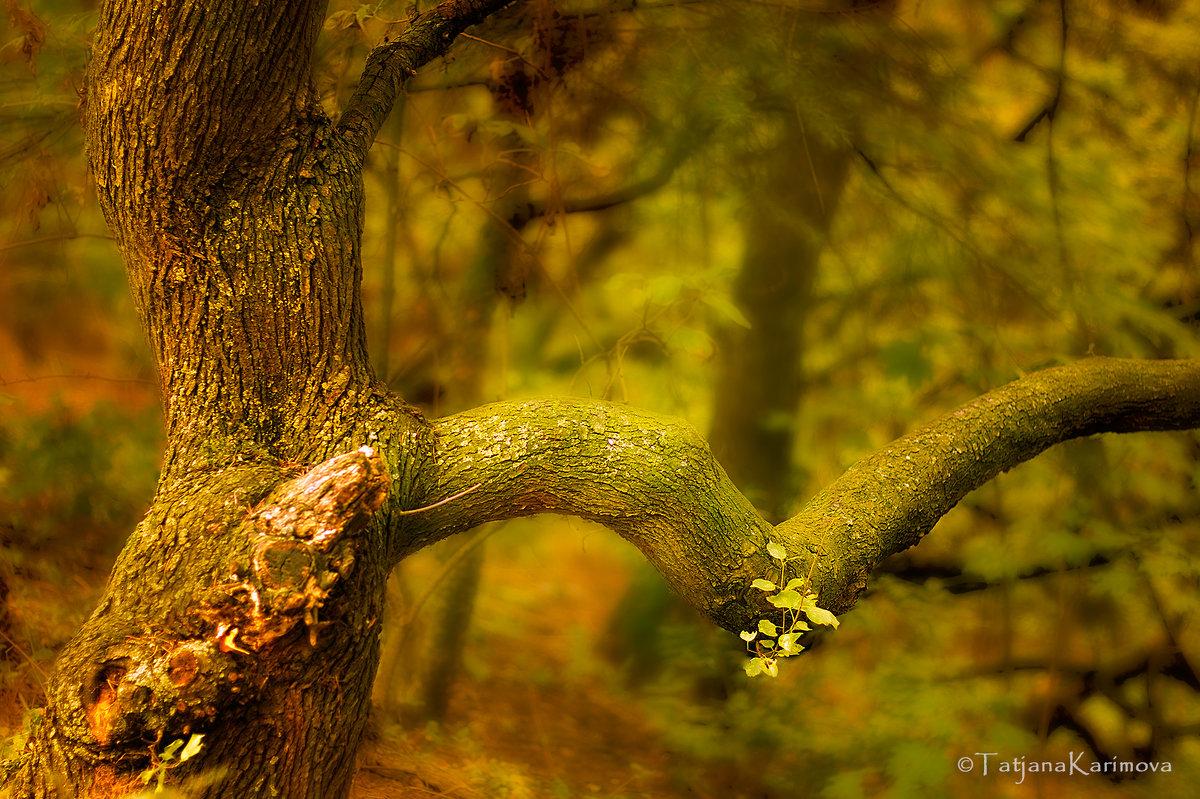 В лесу - Татьяна Каримова