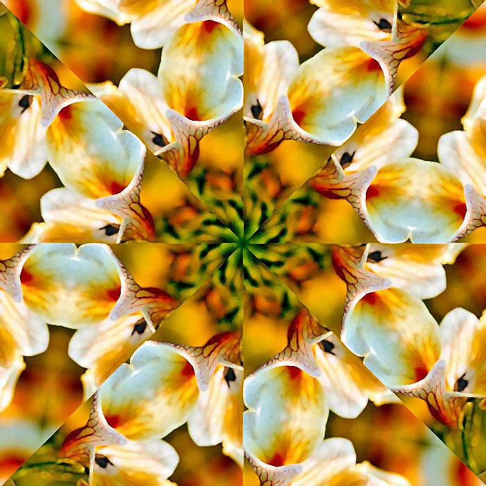 Цветы - Vlad - Mir