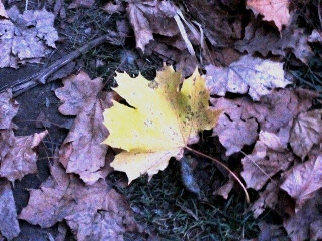 Жёлтый лист осенний - Дмитрий Никитин