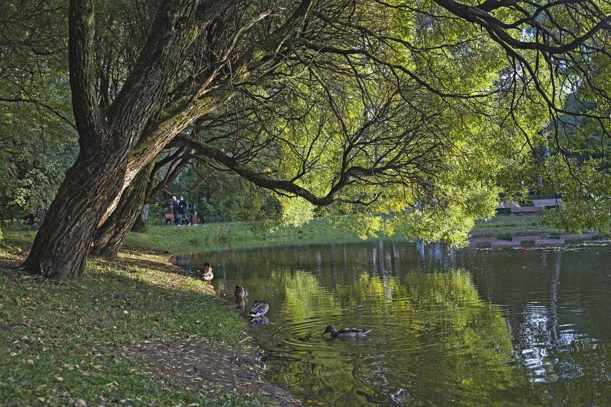 Осенний , солнечный абажур, у озера. - Viacheslav Birukov