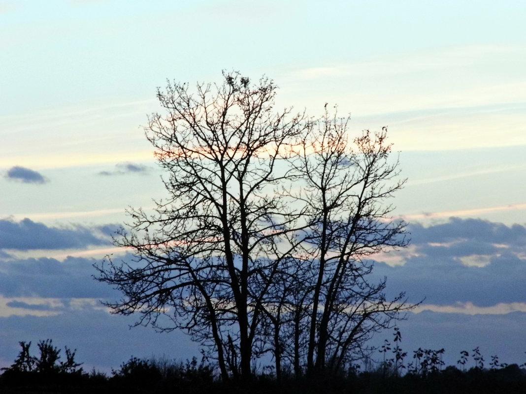 Одинокое дерево - Шура Еремеева