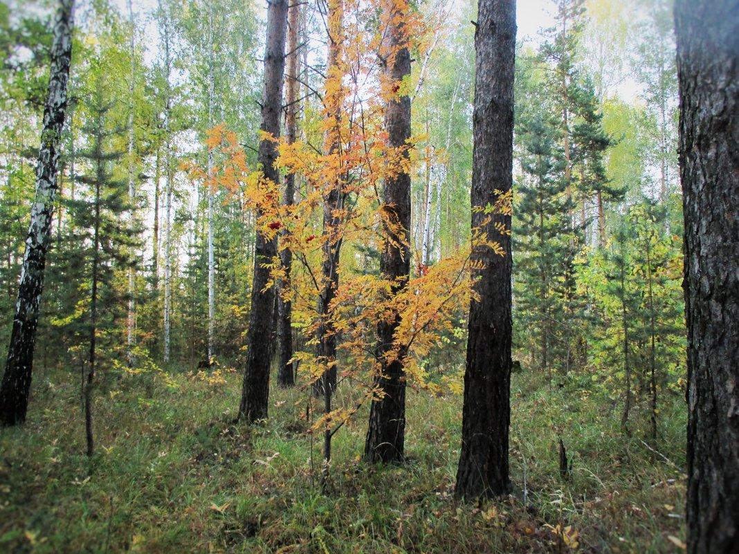 Краски осеннего леса. - Valentina