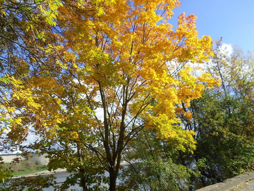 Осень во всей красе - BoxerMak Mak