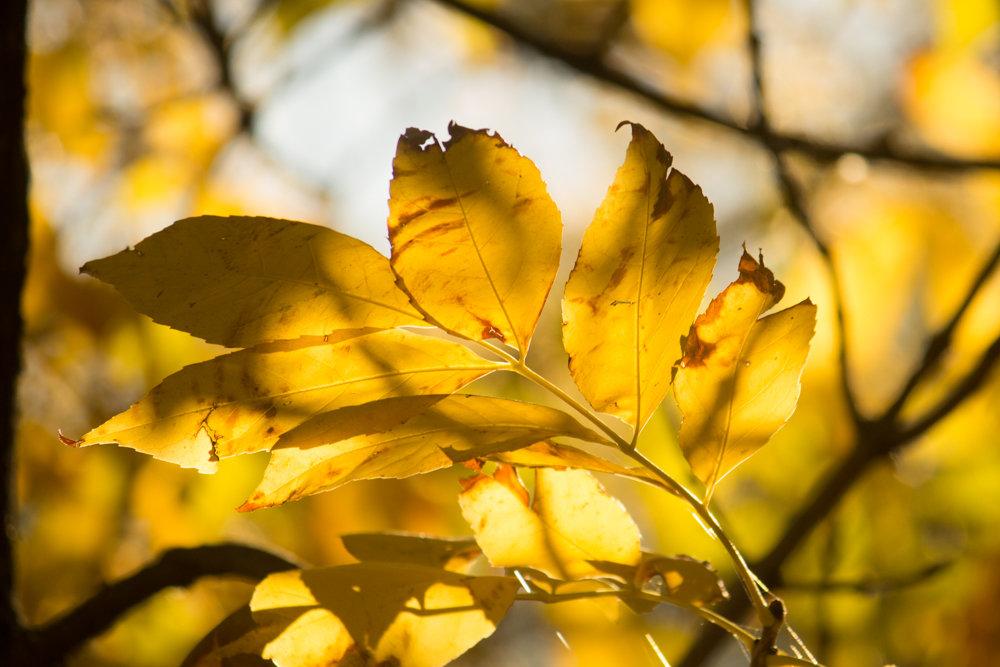 осень - Надежда Щупленкова
