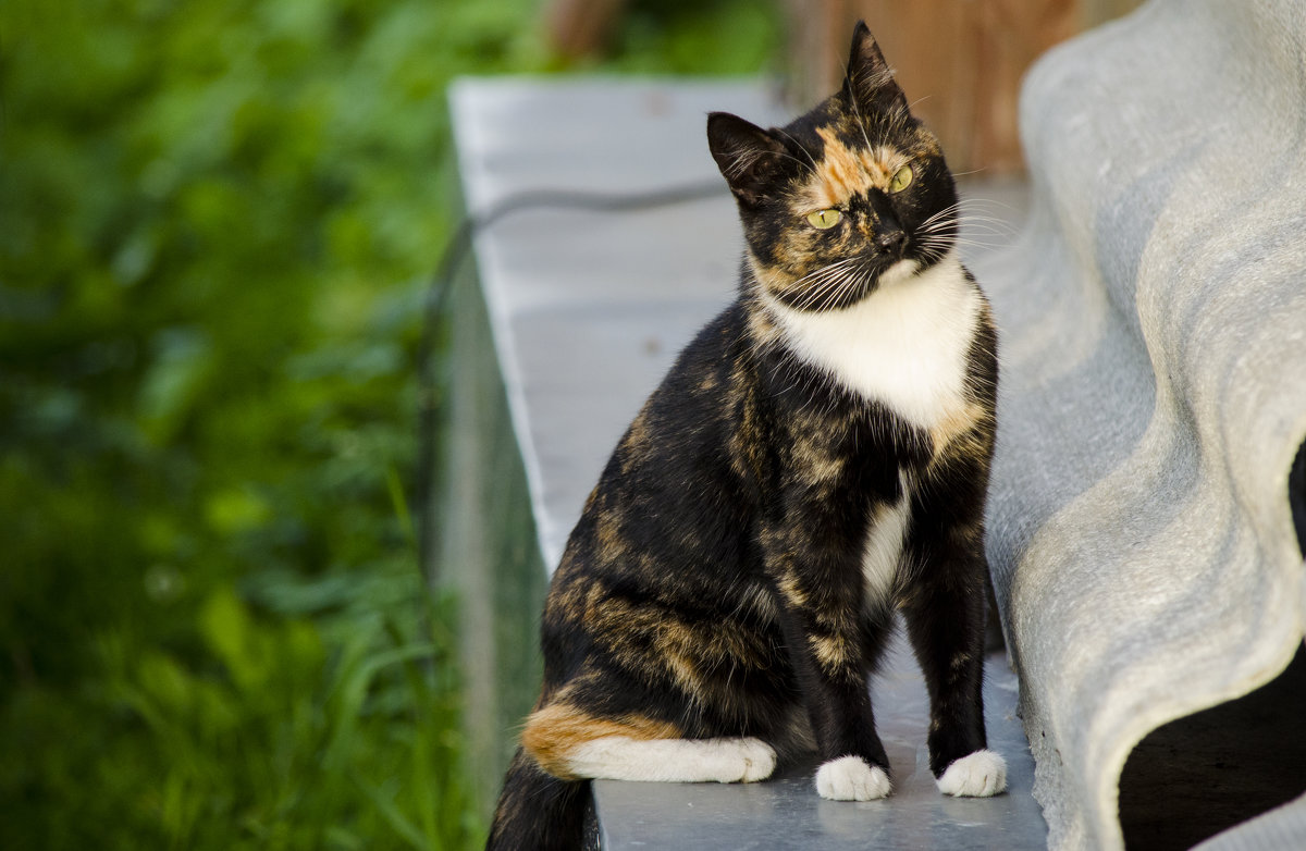 Кошка - Марина