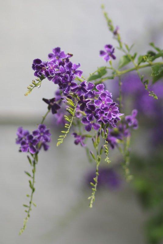 цветик - Натали