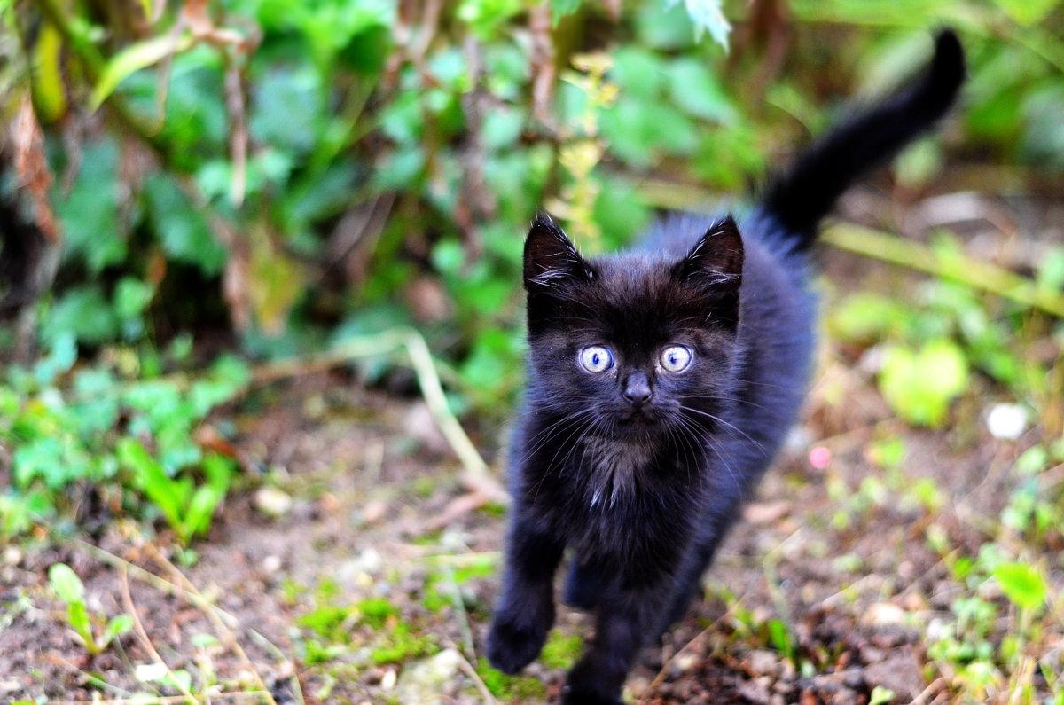 Котёнок бежит - Марина Романова