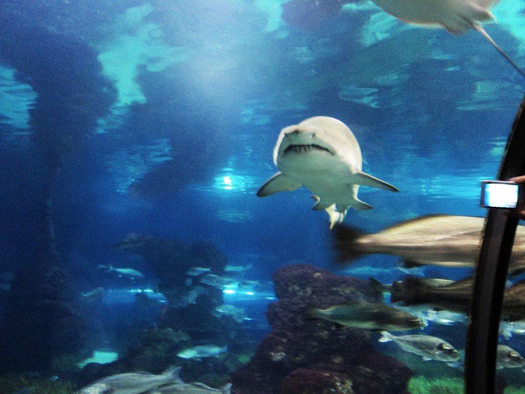 акула - kuta75 оля оля