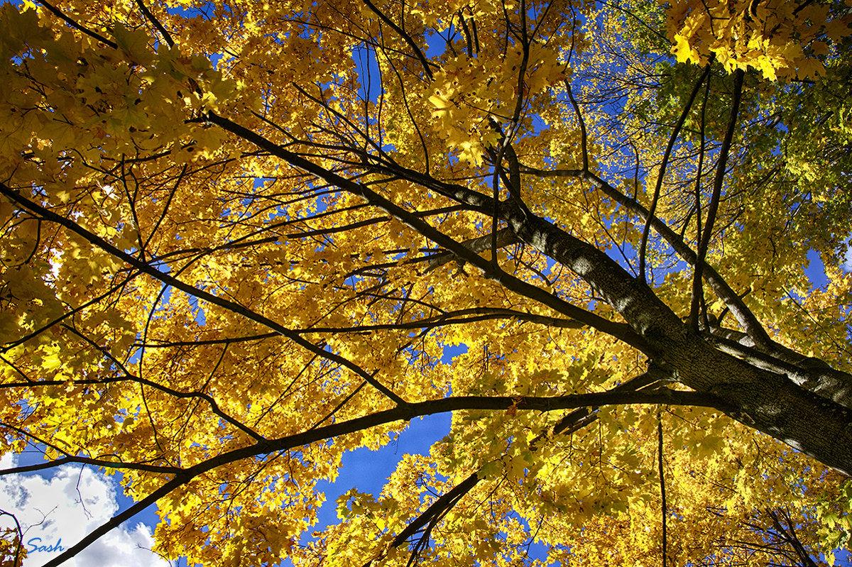 Типа осень (Спб - Как бы осень) - Alex Sash