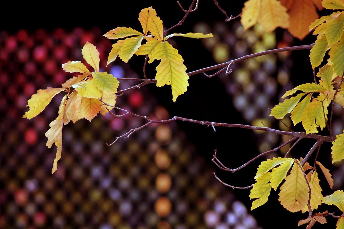 Осень - Екатерина Торганская