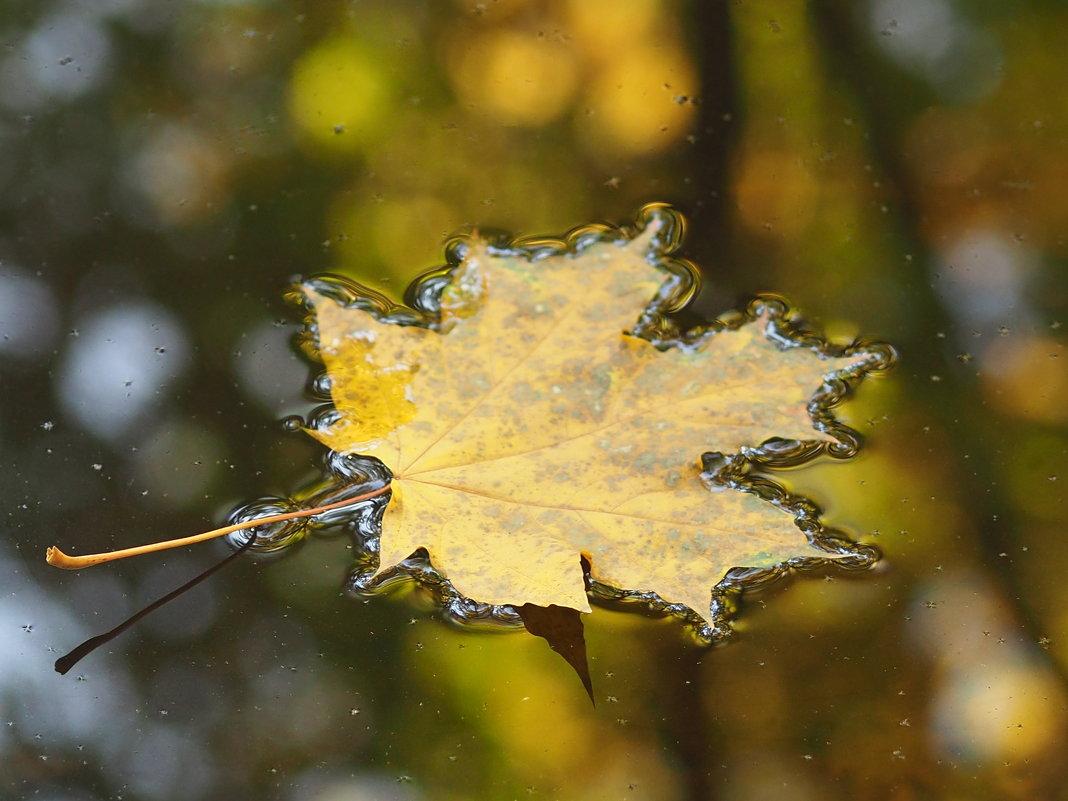 Осенний листок , он так одинок - Игорь Касьяненко