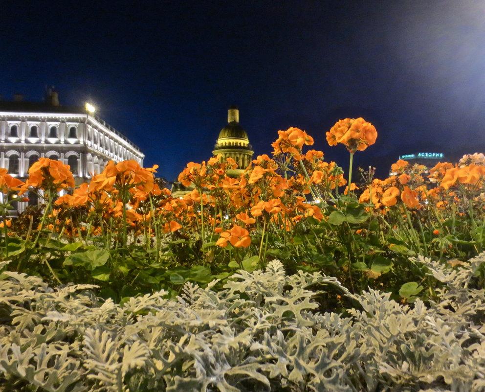 поздний вечер на Исаакиевской - Елена
