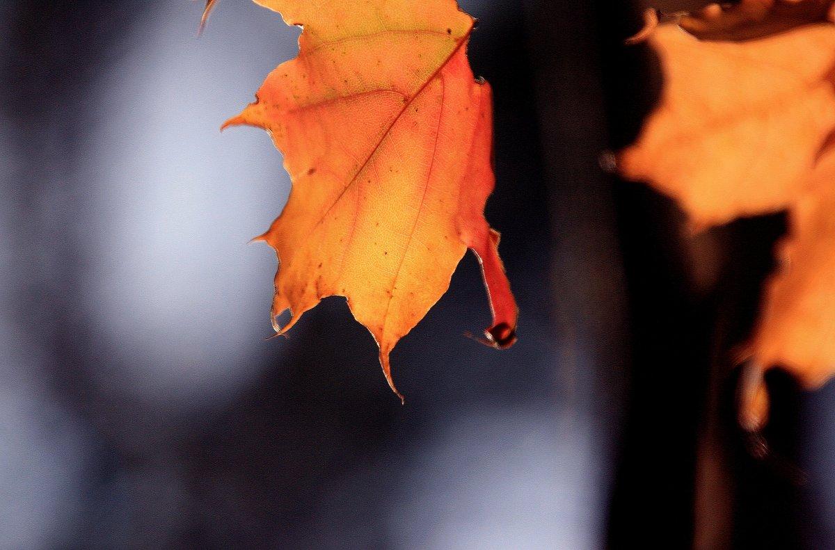 Осенняя слеза.... - Валерия  Полещикова