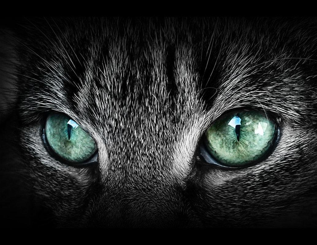 смотри мне в глаза! - Лара Leila