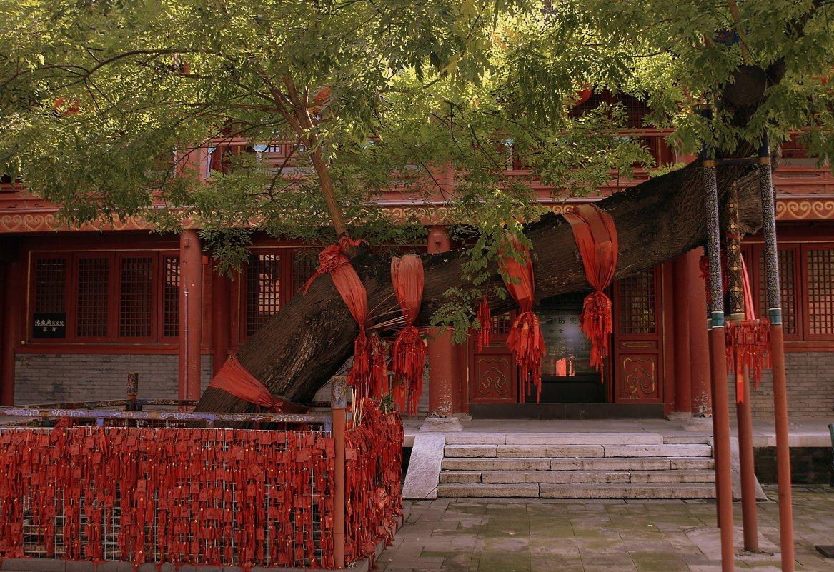 Даосский храм - Лара Лаби
