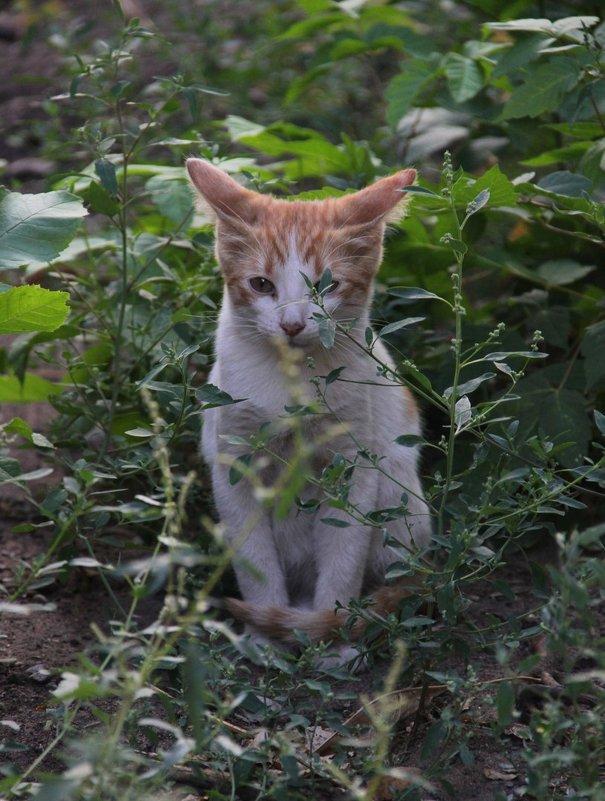 Кот в траве - Elena Kashmareva