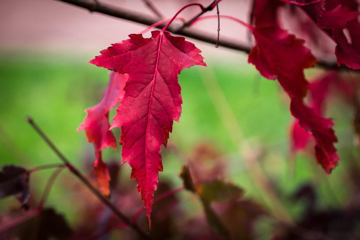 Осенний лист - Марк Э