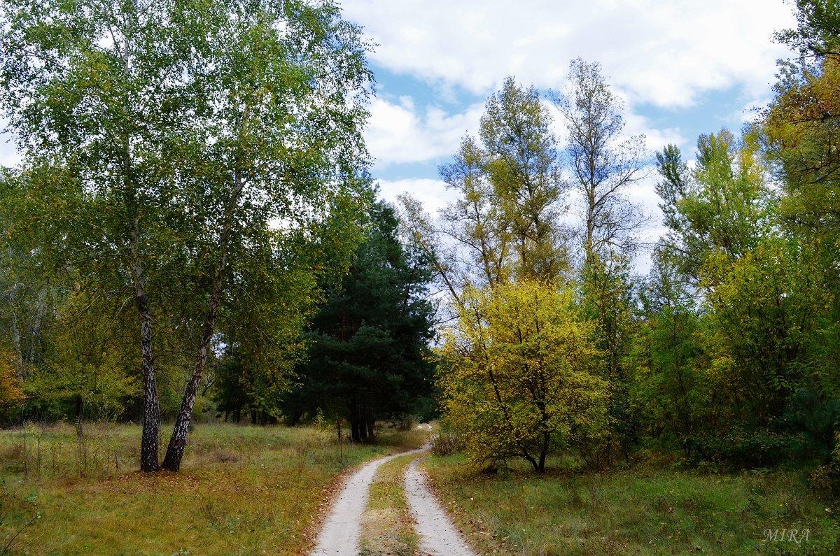 Осенний лес - прекрасен и печален... - *MIRA* **