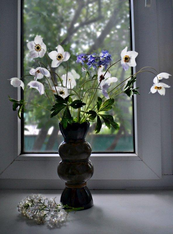 Цветы на окошке - Клара