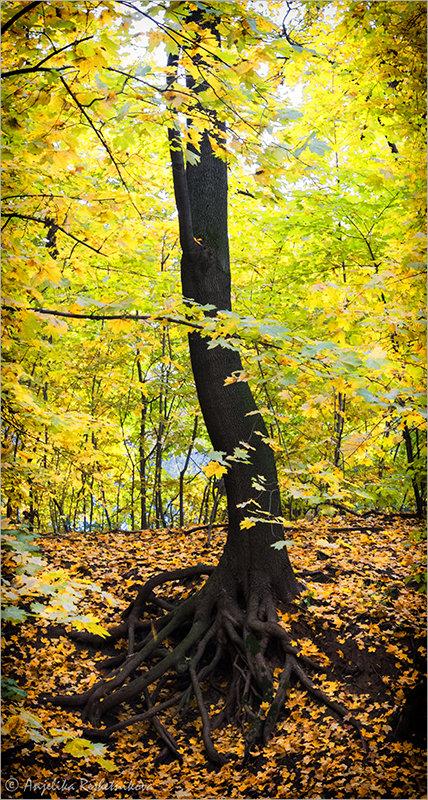Вековое дерево - Anjelika Reshetnikova