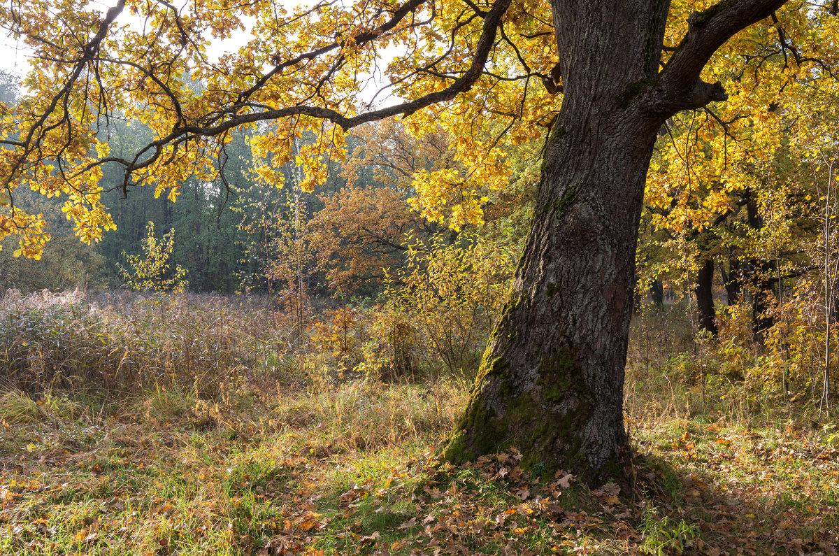 Вот и осень... - Андрей Зайцев