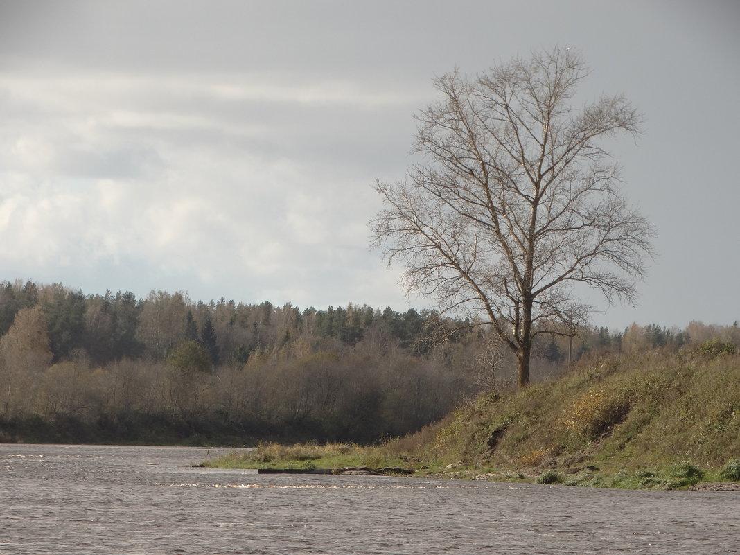 тополь и река - Михаил Жуковский