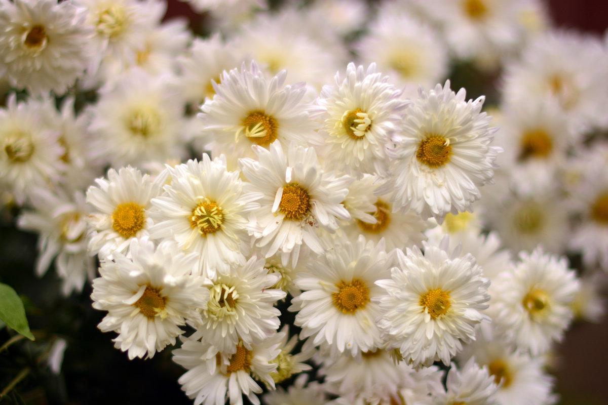 Осенние цветы - Юрий Фёдоров